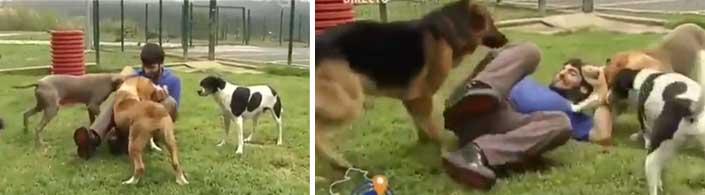 Un glorioso momento en le televisión Gallega con unos perros