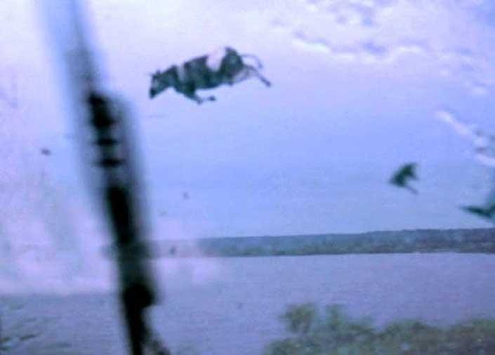 ¿Me ha parecido ver vacas volando en ese tornado?