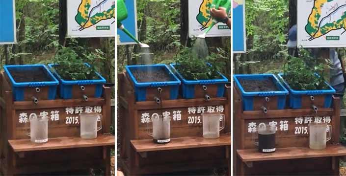 Experimento que demuestra de un modo muy simple el impacto de la deforestación en las inundaciones