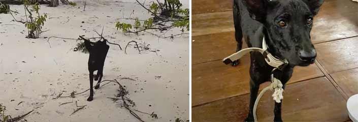 perro amazonas - Se encuentra un perro abandonado en una isla desierta
